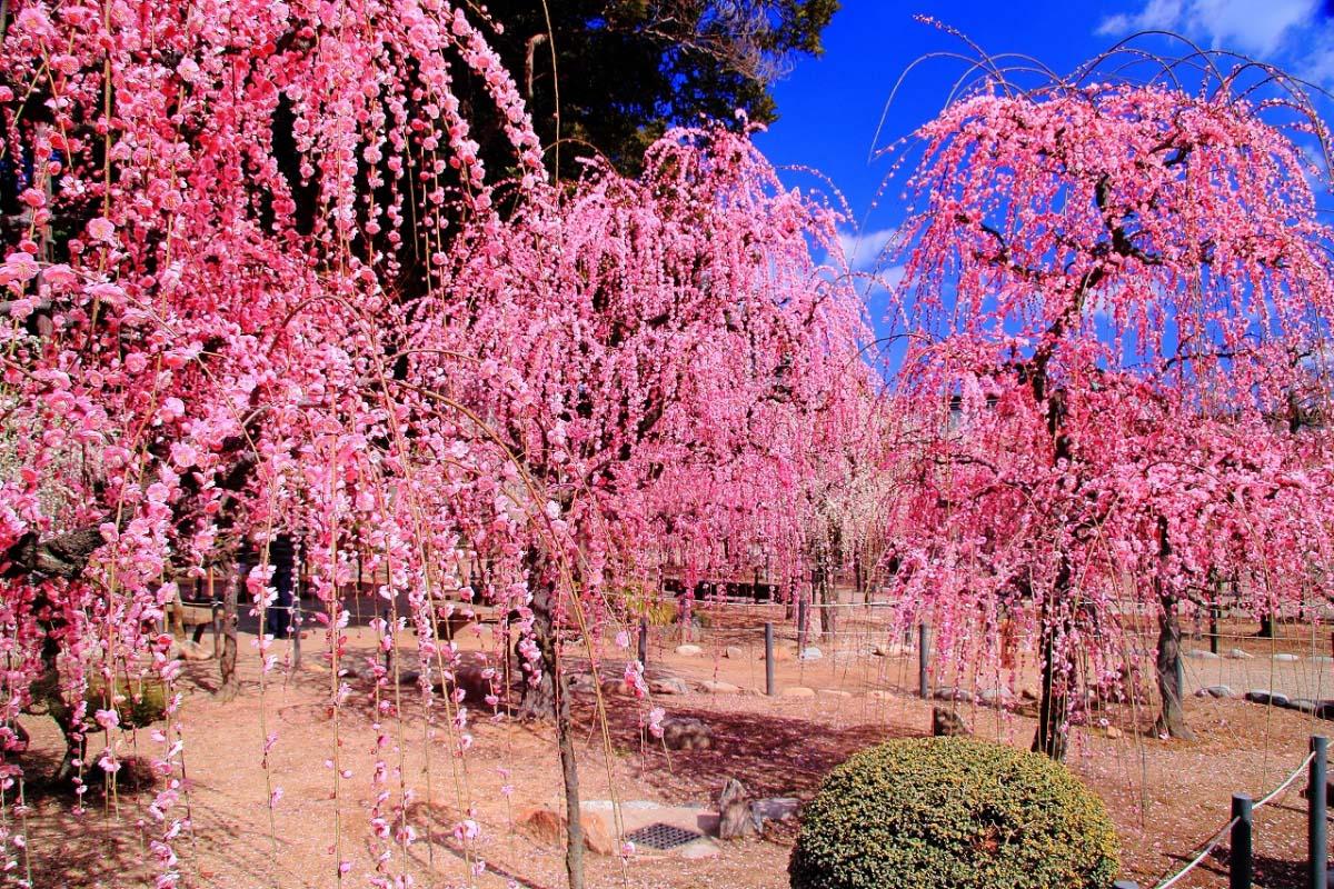 結城神社の絶景|ZEKKEI Japan