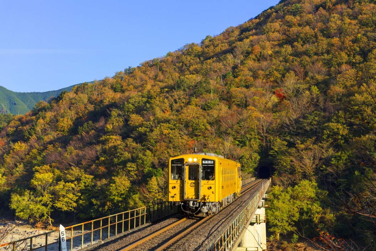 Shiman Torocco Trolley