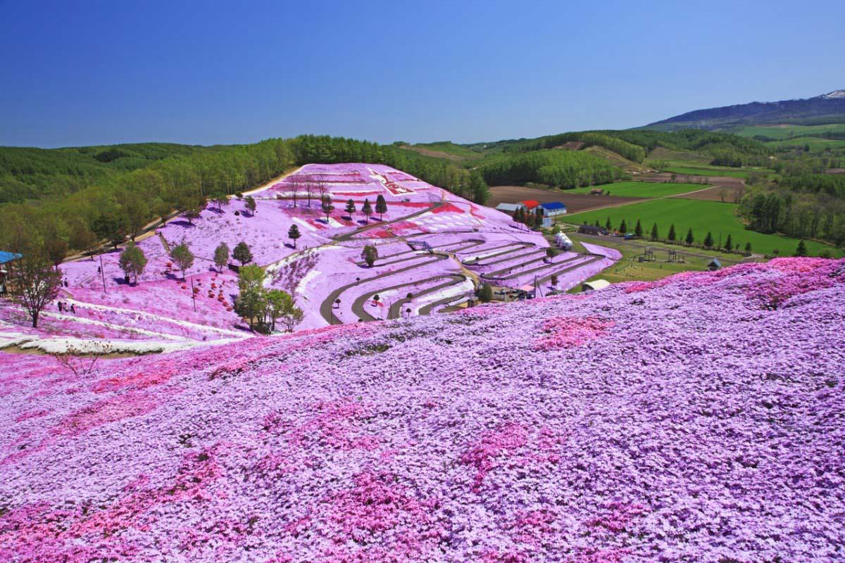 東藻琴芝櫻公園