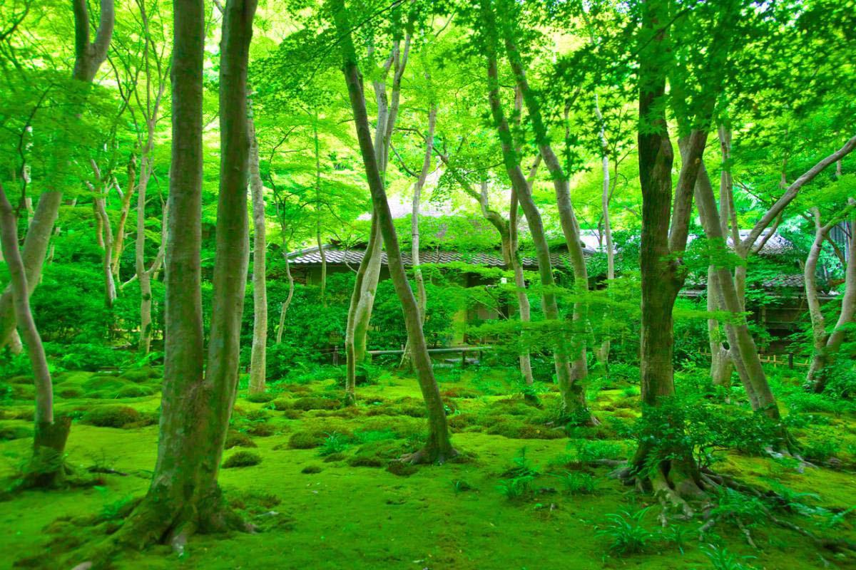 Gioji Temple