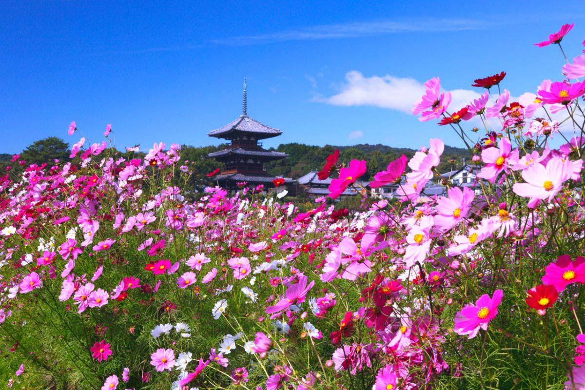 Hokki-ji Temple