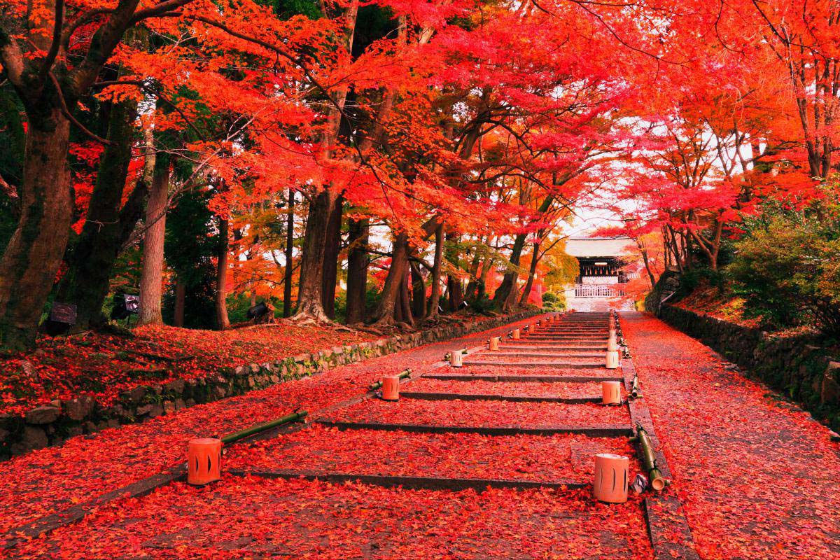 Bishamondo with red leaves of autumn