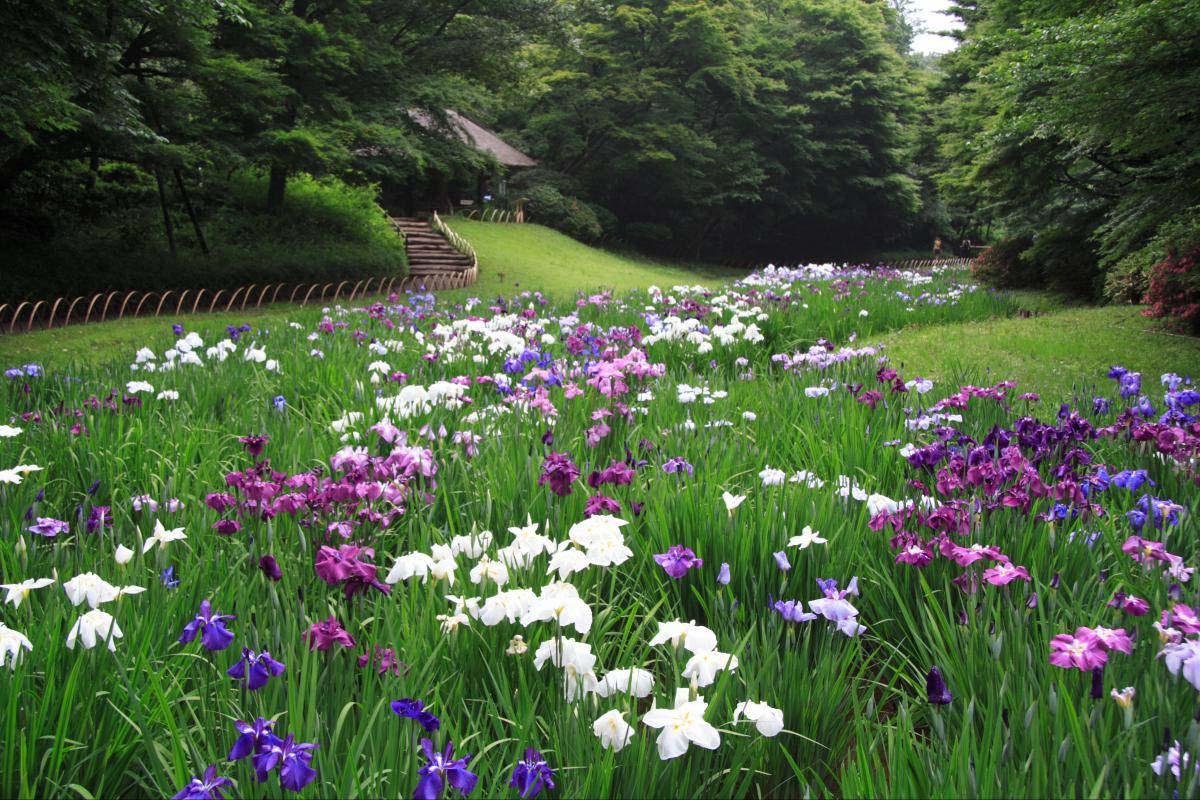 明治神宮の絶景 ZEKKEI Japan