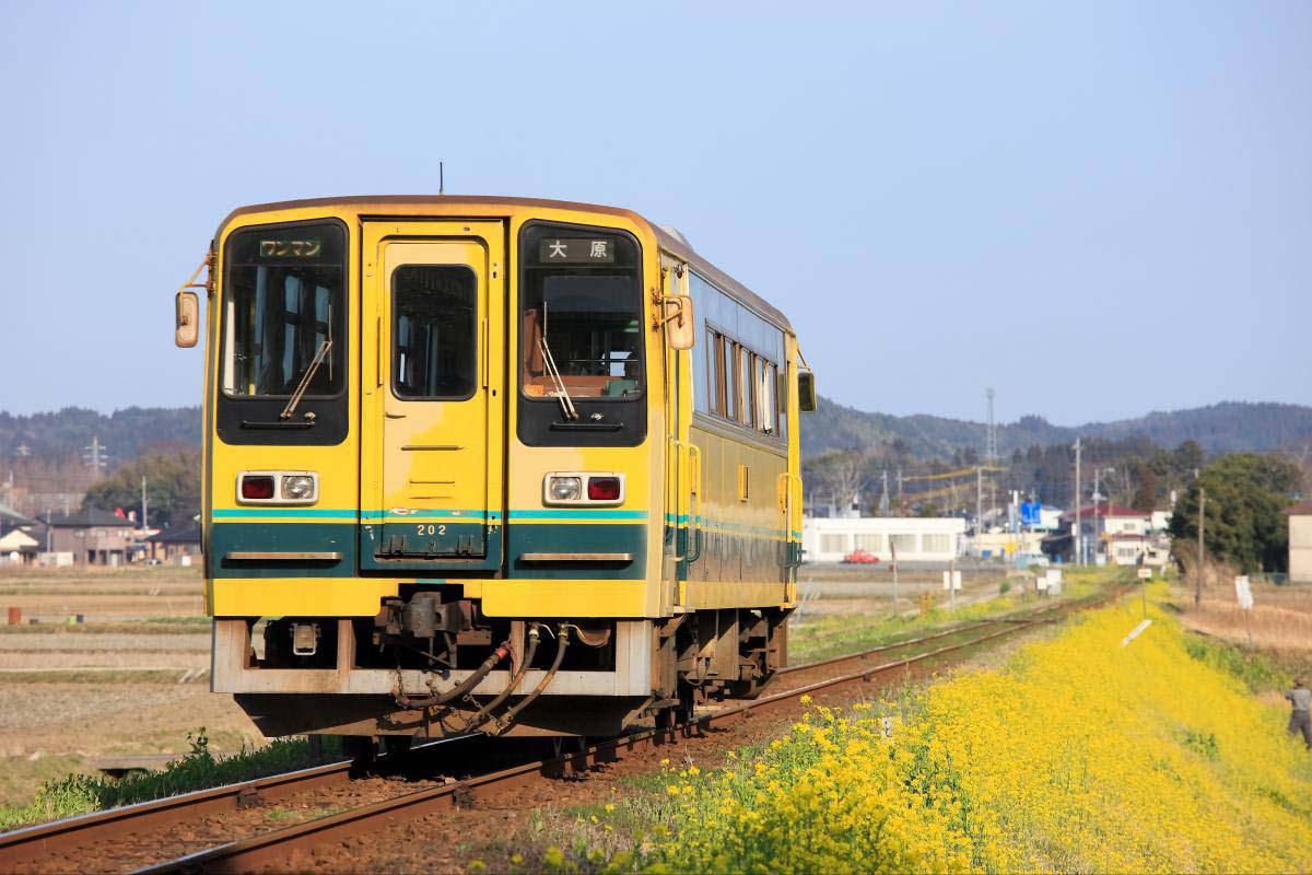 夷隅鐵道 油菜花列車