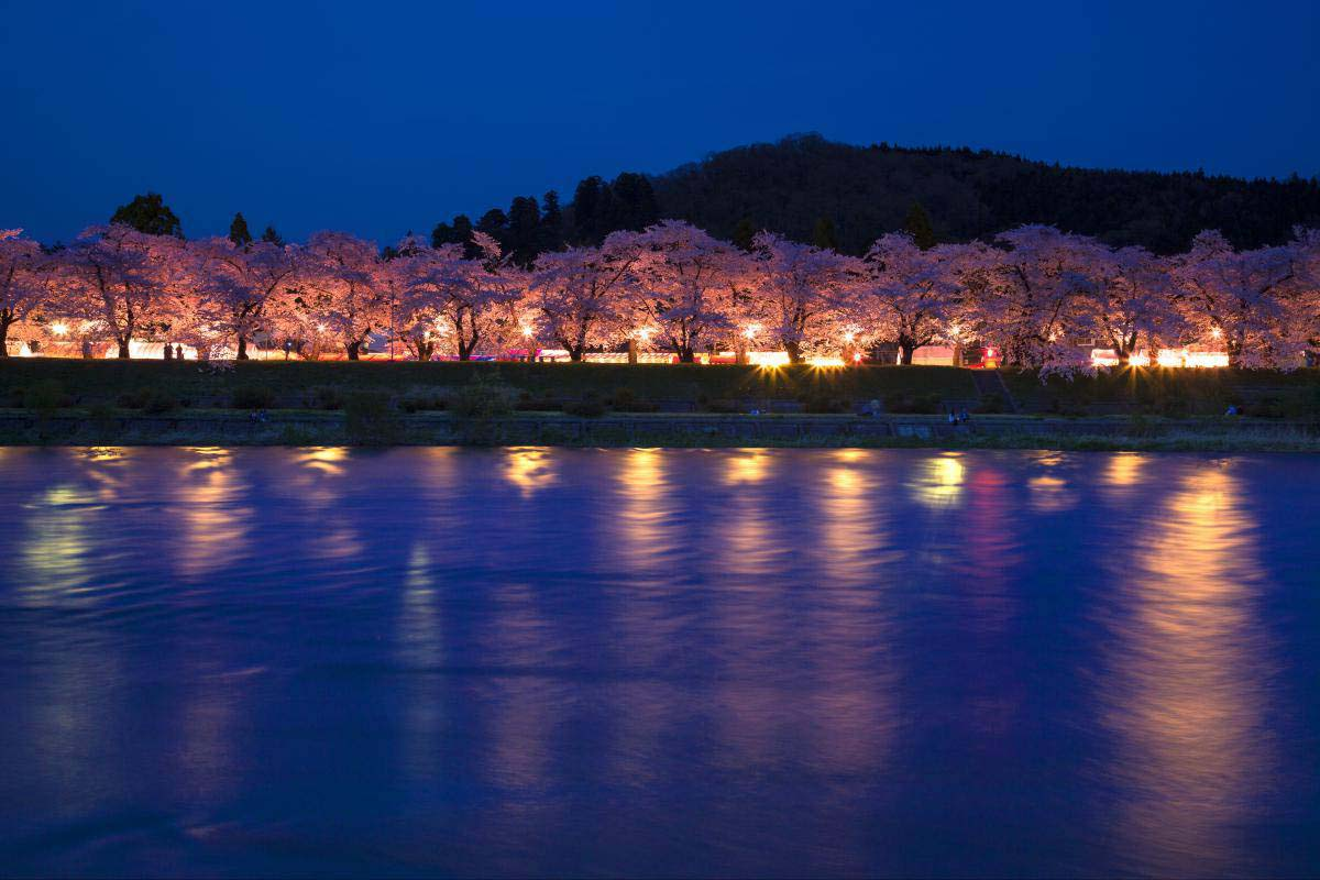 Row of cherry blossom trees of Hinokinai river