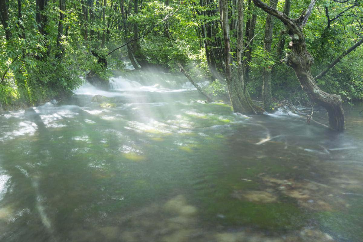 Shikogabana swamp