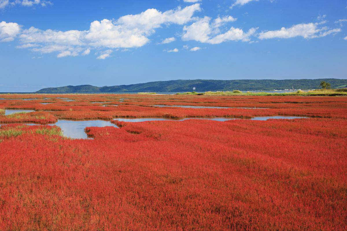 「網走能取湖 北海道 秋天」的圖片搜尋結果