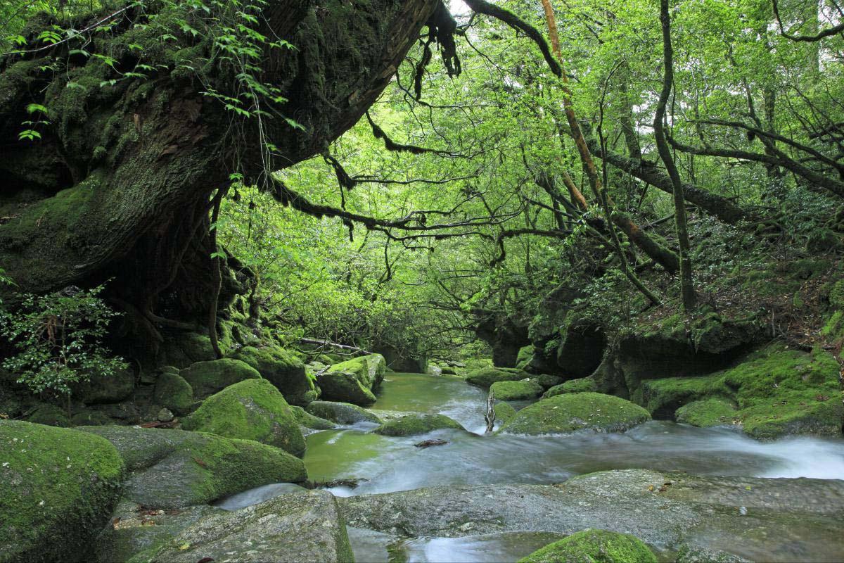 屋久島的景點資訊|絕景日本
