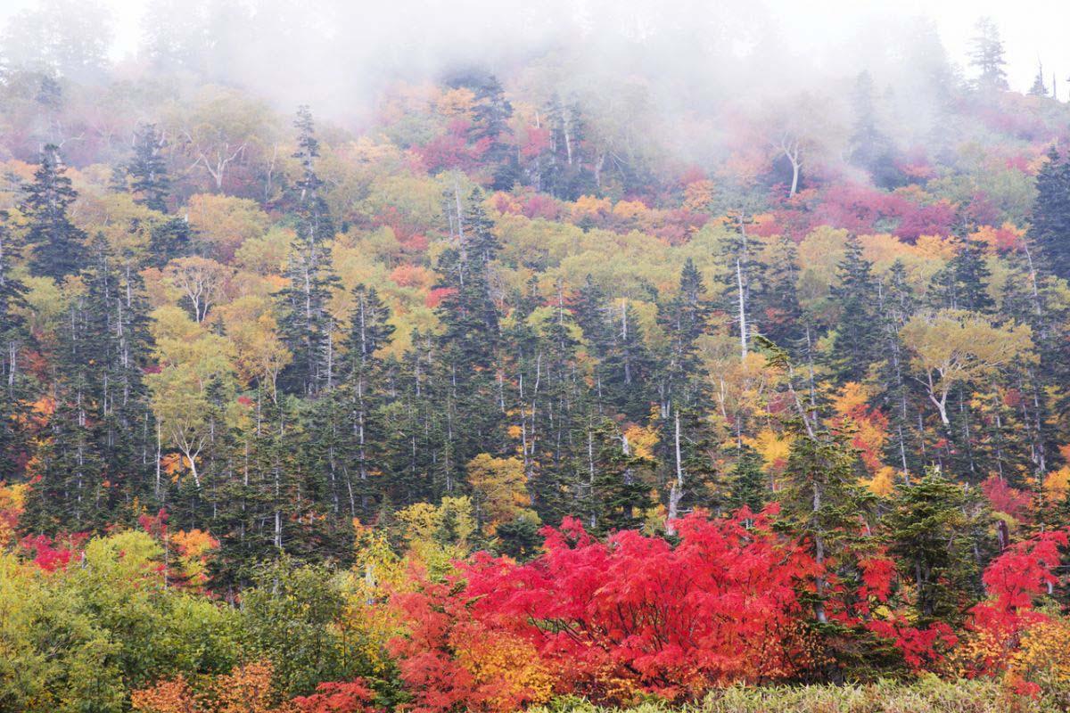 Mt. Tateyama, Midagahara Wetlands