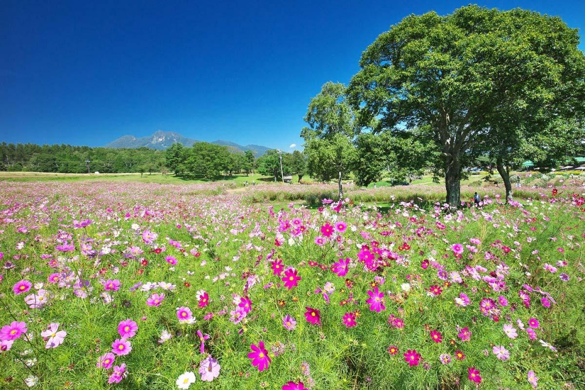 黒姫高原の絶景 ZEKKEI Japan