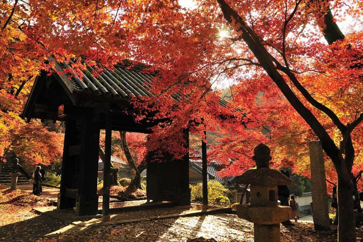 「甘木市.秋月城跡 紅葉」的圖片搜尋結果
