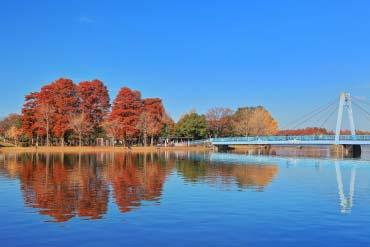 都立水元公園(東京)