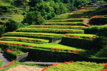 Tsuzura Rice Terrace