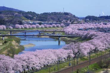 白石川堤一目千本桜(宮城)