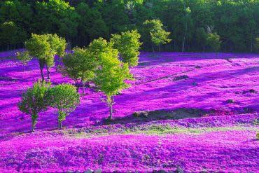 瀧上公園(北海道的其他景區)