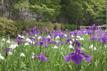 福岡城跡(福岡・博多)