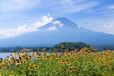 河口湖大石公园(富士山)