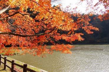 龜山湖(千葉)