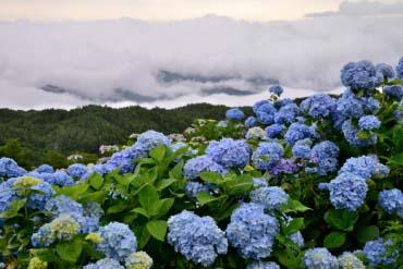 大川原高原(徳島)