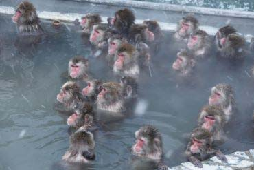 Hakodate Monkey Mountain