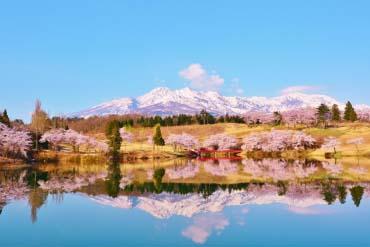 松ヶ峯の桜