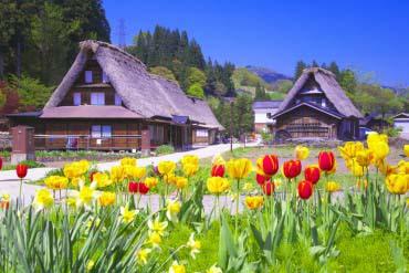 The Historic Village of Gokayama