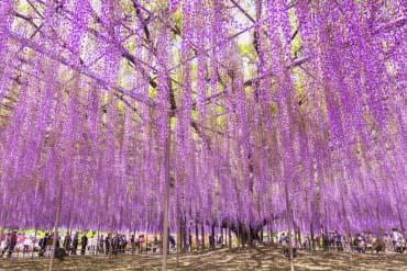 足利花卉公園(栃木)