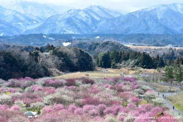 いなべ市農業公園 (三重・伊勢志摩)