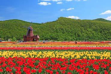上湧別鬱金香公園(北海道的其他景區)