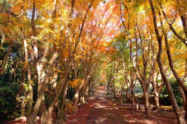 河內藤園(福岡・博多)