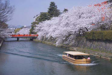 Cherry trees of Lake Biwa Canal(Shiga & Lake Biwa )