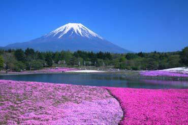 富士芝桜まつり(富士山)