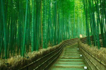 嵯峨野 竹林(京都)