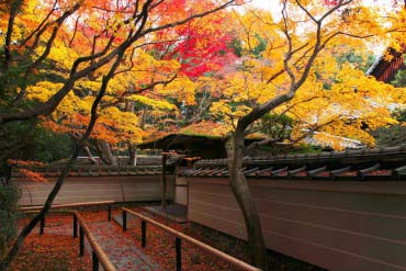 Koto-in Red Leaves of Autumn(Kyoto)
