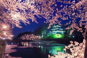高田公園の桜(新潟)