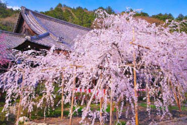 Bishamondo with red leaves of autumn(Kyoto)