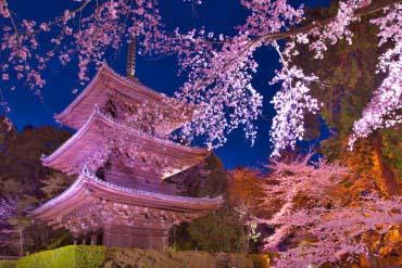 Mii Temple(Shiga & Lake Biwa )