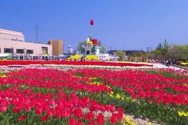 砺波鬱金香公園