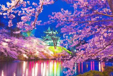 高田公园之樱