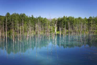 青い池(富良野・美瑛・層雲峡)