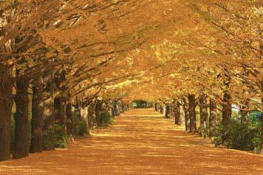 昭和纪念公园(东京)