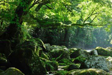 菊池渓谷(熊本)