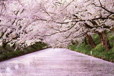Hirosaki Park(Aomori)