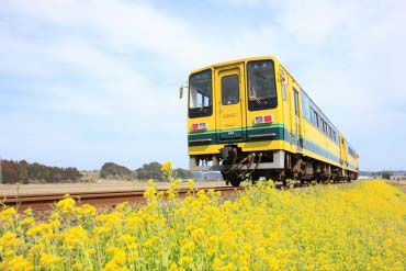 いすみ鉄道 菜の花列車(千葉)