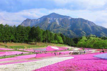 Hitsujiyama park(Saitama)