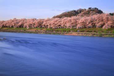 桧木内川樱花树(秋田)