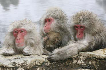 Jigokudani Monkey Park(Nagano)