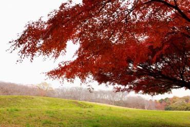 根岸森林公園(橫濱)