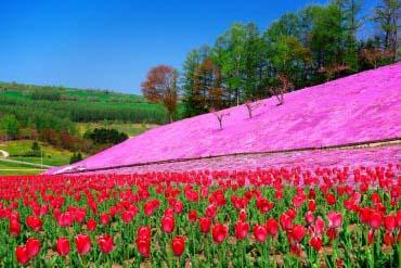 太陽の丘えんがる公園(北海道その他)