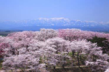 置賜櫻花迴廊(山形)